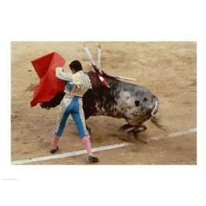 Matador fighting a bull, Plaza de Toros, Ronda, Spain  24 x 18  Poster