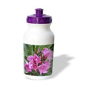 Photography   Oleander   Oleander Pink   pink, flower, tree, oleander