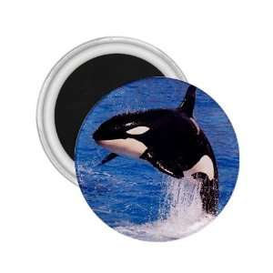 Orca Killer Whale Refrigerator Magnet