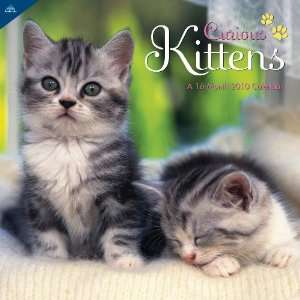 Curious Kittens 2010 Wall Calendar (9781604346657): Inc