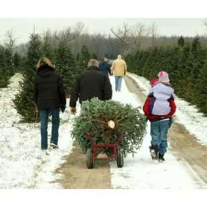 Family Cutting Christmas Tree   Peel and Stick Wall Decal