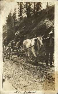 Western North Carolina? NC Express Ox Plow c1910 Real Photo Postcard