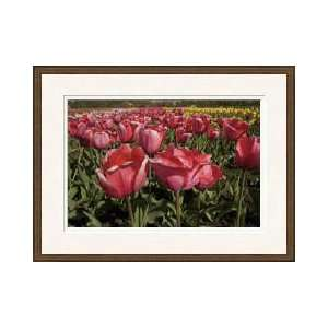 Tulip Time Holland Michigan Framed Giclee Print