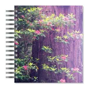 ECOeverywhere Rhododendron and Redwood Picture Photo Album