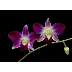 Two Orchids Greeting Cards (5 card set)