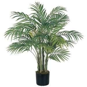3 Areca Silk Palm Tree: Patio, Lawn & Garden