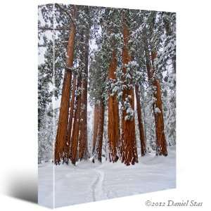 SEQUOIAS GIANT TREES Winter Snow Landscape CANVAS GICLEE