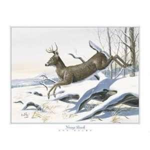 Don Balke   Young Buck Canvas