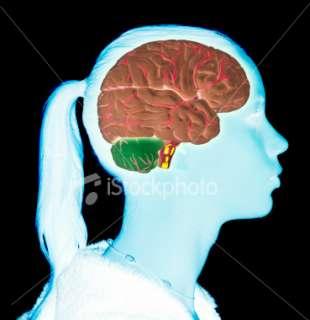 Teen girls brain Royalty Free Stock Photo