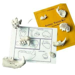 Skullduggery   Animal Tooth   Classroom Science Kit Toys & Games